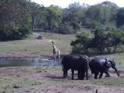 Tembe - Parque de Elefante…