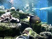 Shirahama - Shirahama Aquarium
