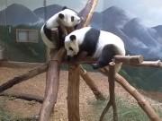 Atlanta - Zoo Atlanta (Panda)