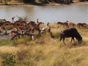 ムプマランガ - 猟獣保護区 (Djuma)