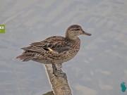Gautegiz Arteaga - Urdaibai Bird Center