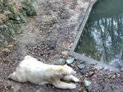 Brno - Brno Zoo