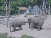 アメルスフォールト - 動物園