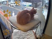 Kyoto - Cat Cafe