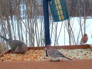 Akron - Animales Salvajes …