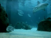 Sarasota - Mote Aquarium