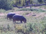 Olifants River - Wildlife