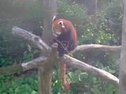 米尔布鲁克 - Trevor动物园