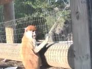 托皮卡 - 动物园