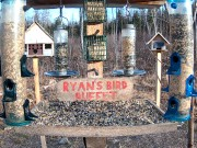 Brownville - Ciervos